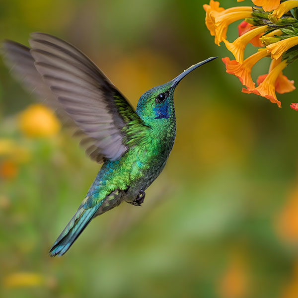 Image result for photograph of birds